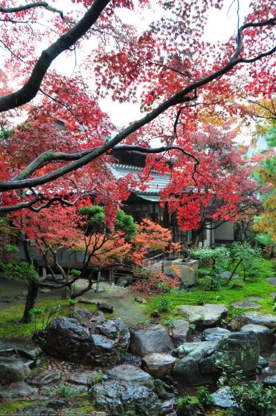 庭園と紅葉(もみじまつり)2