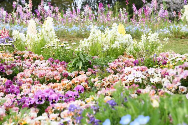里山ガーデン_DB-P-015