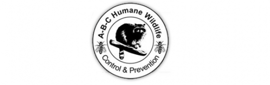 ABC Wildlife Women in STEM Scholarship