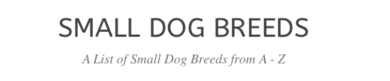 Small Dogs Breeds Scholarship