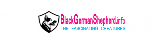Black German Shepherd's Scholarship