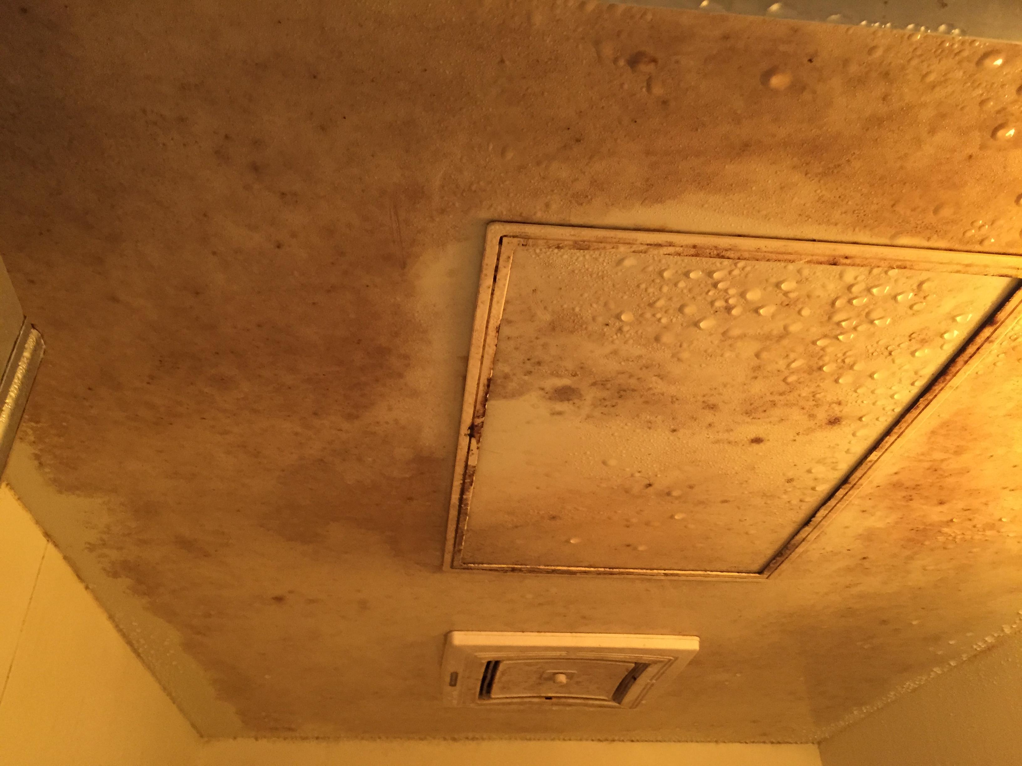 日本一掃除しがいのある汚い家を掃除してきた お風呂のカビ編