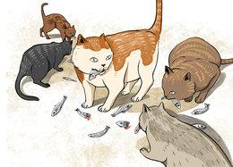 Five hungry cats feeding on fish - StoryWeaver