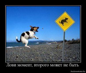лovi-moment-vtorogo-mozhet-ne-byit