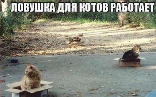 cat_trap