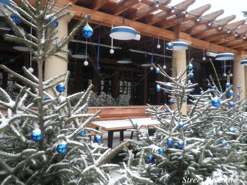 holiday_trees_Odessa