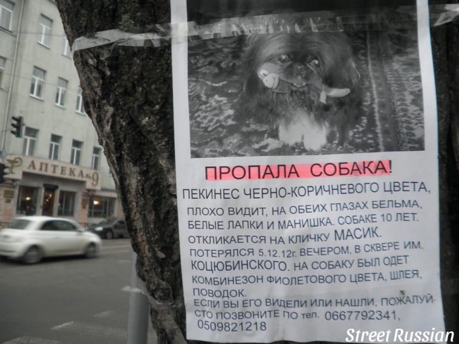 lost_dog3