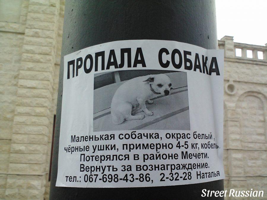 lost_dog4