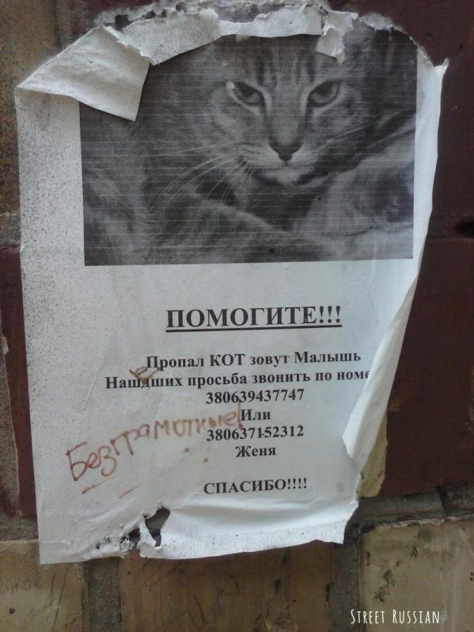 lost_cat