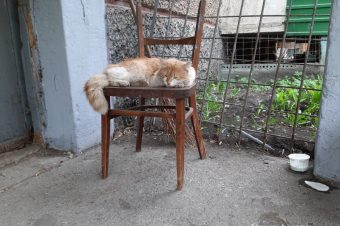 The Cats of Chelyabinsk