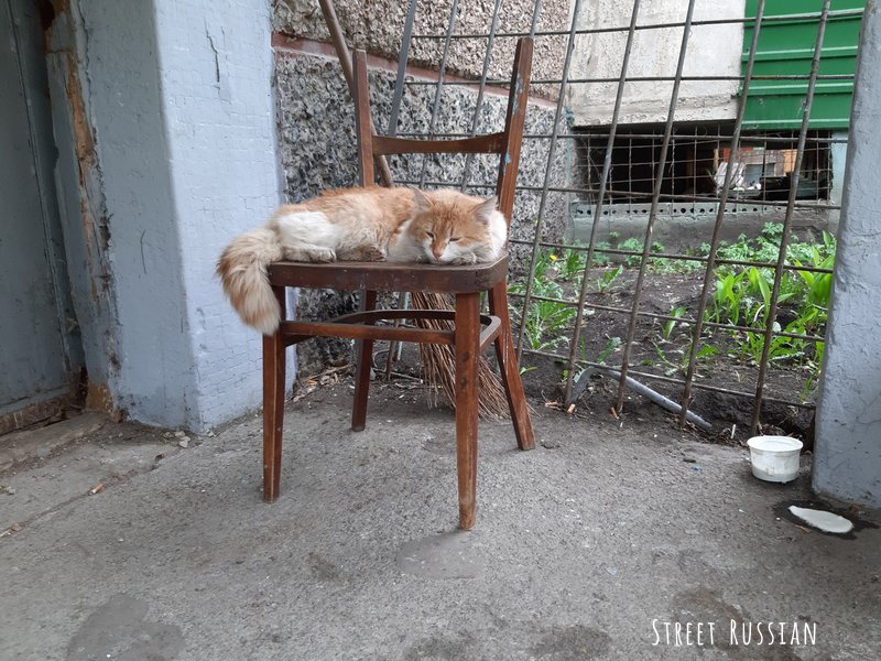 The Cats of Chelyabinsk