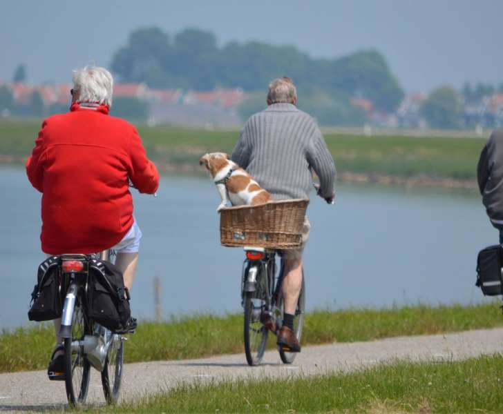 Three elderly men riding bikes with a dog in a basket on the back of one bike