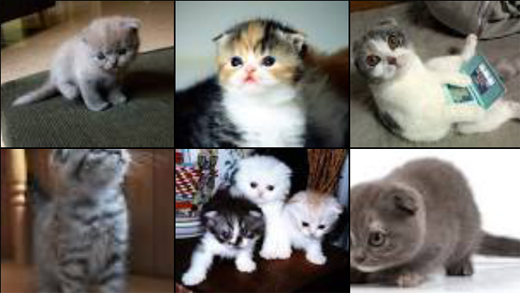"Glass ""picture of scottish fold kittens"" search"