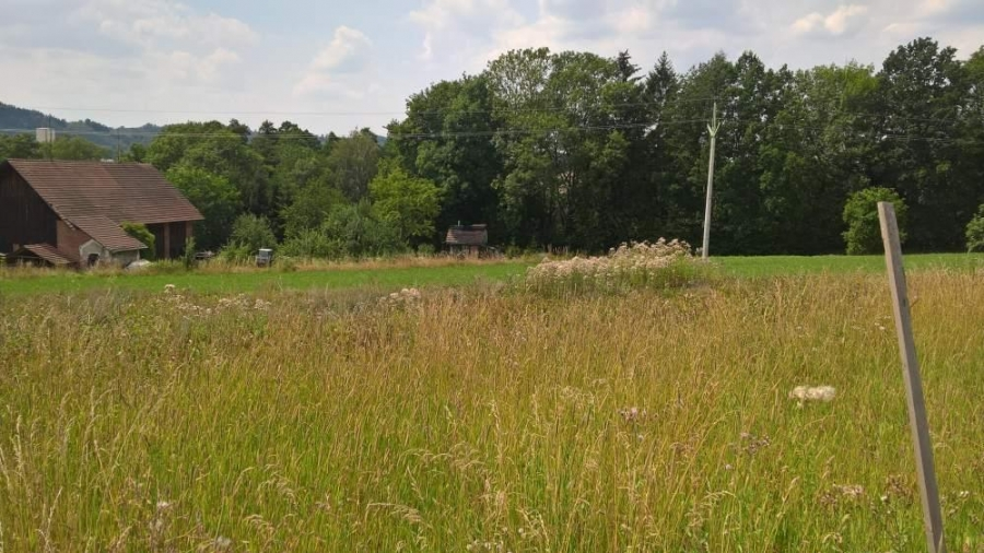 Koupě pozemku