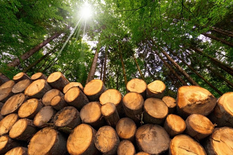 Ze dřeva se budou stavět také bytové domy