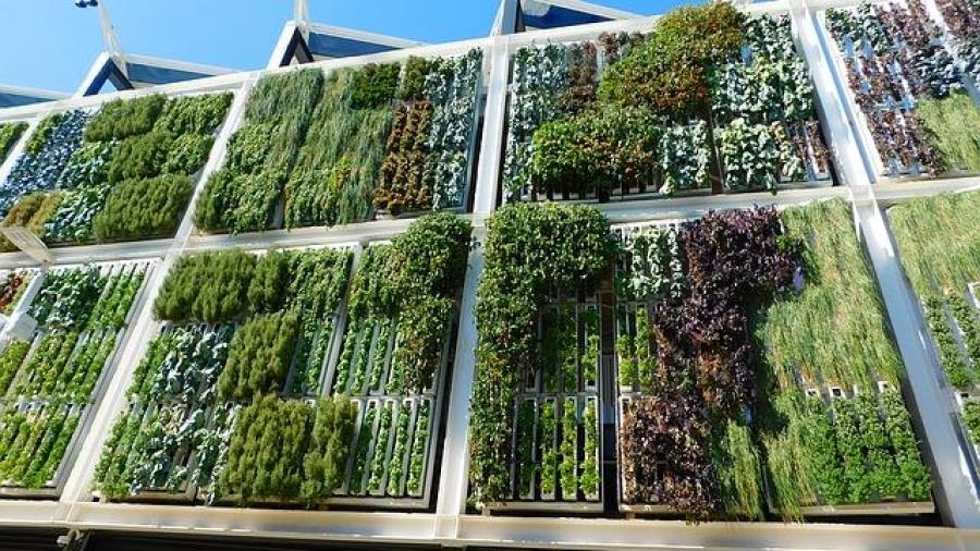 Znáte vertikální zahrady?