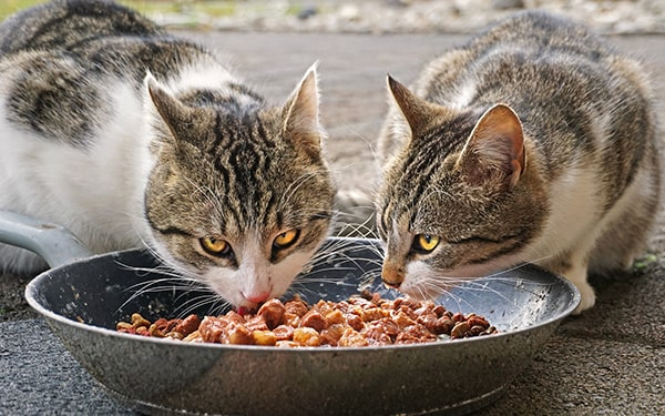 94b59dc8 top 10 cat foods in india buying guide swag swami article