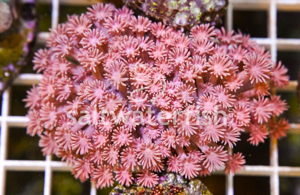 Flower Pot Ultra
