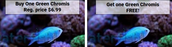 https://storage.googleapis.com/swf_promo_images/19/green-chromis-bogo.jpg