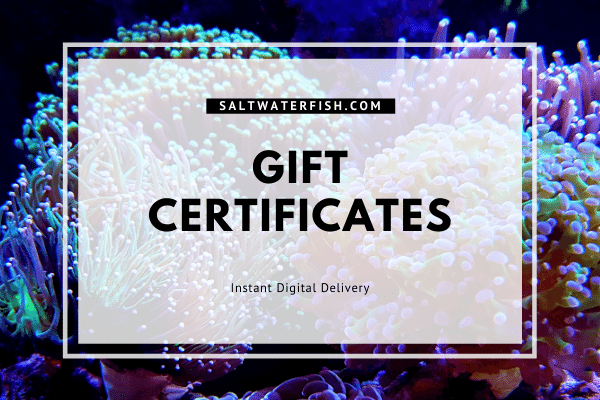 https://storage.googleapis.com/swf_promo_images/2020/2020-gift-certificates.png