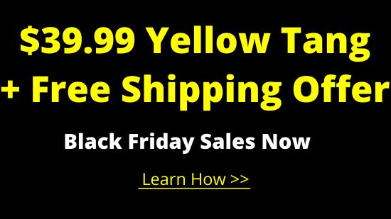 https://storage.googleapis.com/swf_promo_images/2020/3999-yellow-tang.png