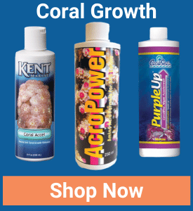 https://storage.googleapis.com/swf_promo_images/2020/coral-growth.png
