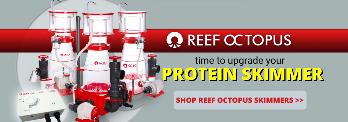 https://storage.googleapis.com/swf_promo_images/2020/reef-octopus-skimmers.png