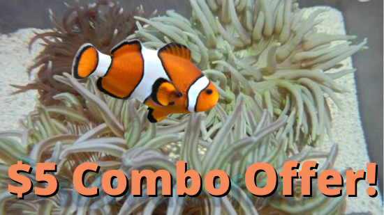 $5 Clownfish with Long Tentacle Anemone