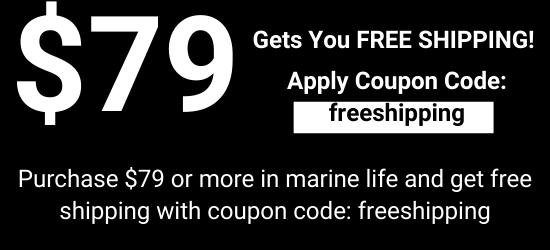 https://storage.googleapis.com/swf_promo_images/black-friday-2019/black-friday-free-shipping.png