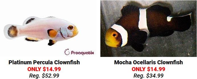 https://storage.googleapis.com/swf_promo_images/clownfish-sale.jpg