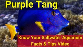 https://storage.googleapis.com/swf_promo_images/education/purple-tang-thumbnail.jpg