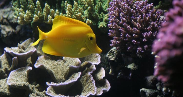 Reef fish marine fish coral aquarium supplies more for Discount aquarium fish and reef