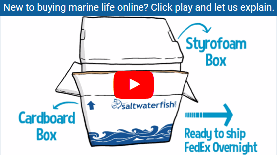 https://storage.googleapis.com/swf_promo_images/home_cms/buying-fish-online-home-cms.png