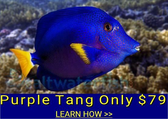 https://storage.googleapis.com/swf_promo_images/home_cms/purple-tang-79.jpg