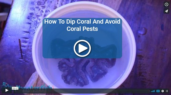 https://storage.googleapis.com/swf_promo_images/home_cms/videos/video-how-to-dip-corals.jpg