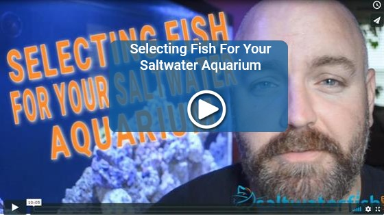 https://storage.googleapis.com/swf_promo_images/home_cms/videos/video-selecting-saltwater-fish.jpg