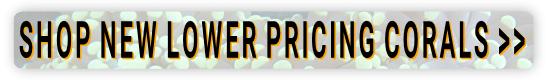 https://storage.googleapis.com/swf_promo_images/lower-price-corals.png