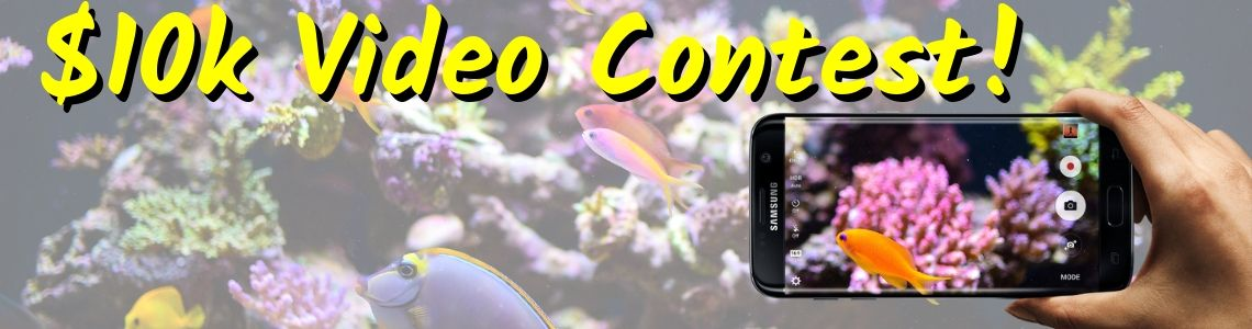 https://storage.googleapis.com/swf_promo_images/video-contest/saltwater-fish-aquarium-video-contest.jpg