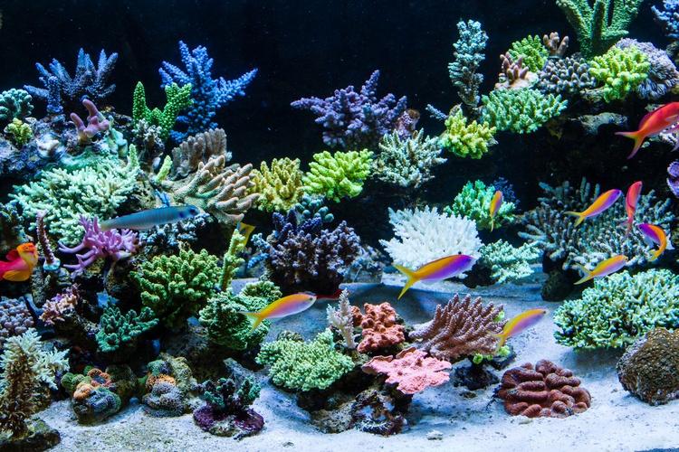 https://storage.googleapis.com/swf_static_images/reef-aquarium.jpg