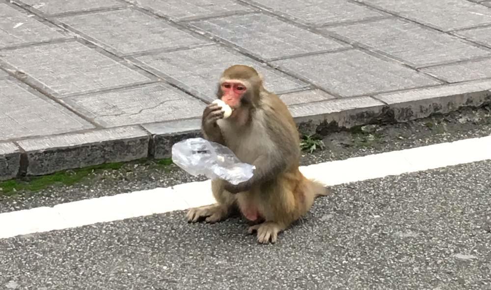 장가계 국립공원 입구 부근에는 원숭이들이 있는데 지나갈 때 음식물을 숨기거나 하지 않으면 와서 낚아채간다.