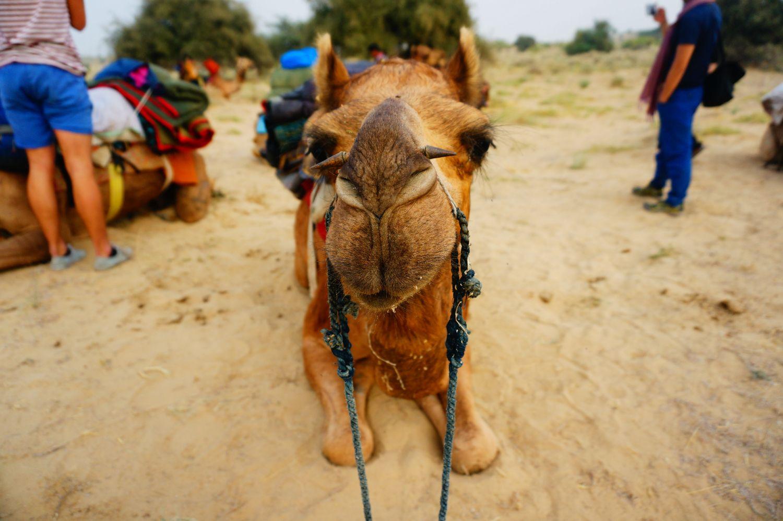 #4-4 사막도시 자이살메르