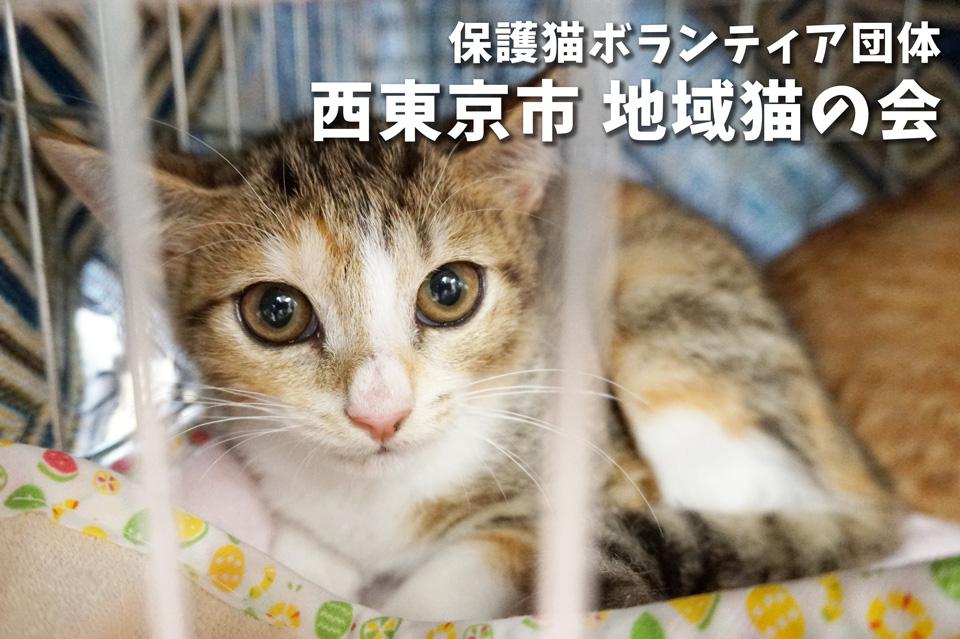 任意団体 西東京市 地域猫の会