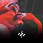 Music Licensing Sites | Artlist vs Synchedin