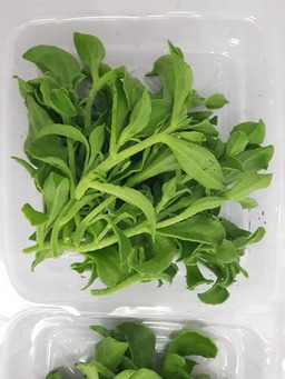 F16 :  ICE PLANT ( Cameron Highlands ) 100G Box