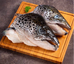 Norwegian Salmon Trout Head (挪威三文鱼头)