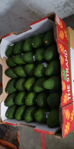 F21. AUSTRALIA AVACADO (1 pc)