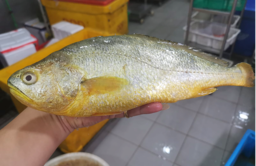 Yellow Croaker Fish (黄花鱼)
