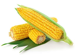 A50 : CORN (JAGUNG) 2 PCS