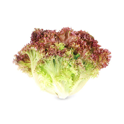 A23 :  RED CORAL LETTUCE(SALAT PURPLE) 300G