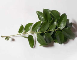 A80 :  CURRY LEAVES  100G